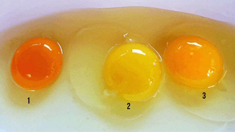 Większość ludzi nie widzi różnicy między tymi żółtkami. Gdybyś miał wskazać to wyglądające najbardziej zdrowo, na które byś się zdecydował?