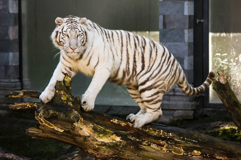 Wiesz, jak wygląda Niebezpieczna Zebra? Nie? To zaraz się dowiesz!