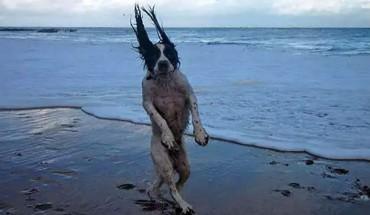 Zabawne zdjęcia psów, jakich jeszcze nie widziałeś. Zobacz, jak duże znaczenie ma perspektywa!