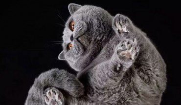 Czy znasz koty od tej strony? Zobacz intrygującą sesję zdjęciową litewskiego artysty!
