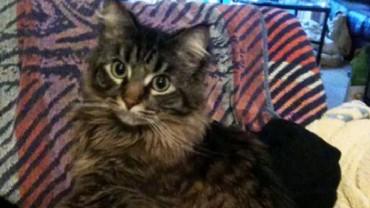 Jak ukarać niegrzecznego kota? Niektórzy właściciele robią to w bardzo zabawny sposób