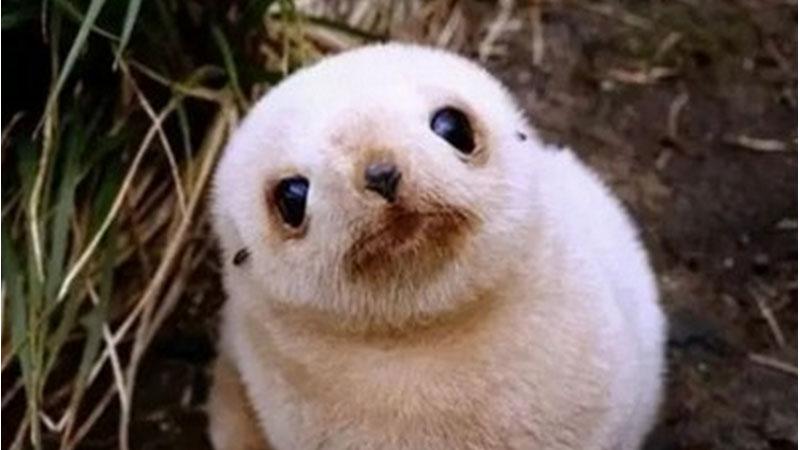 Małe jest piękne! Poznaj szóstkę uroczych zwierząt w rozmiarze mini