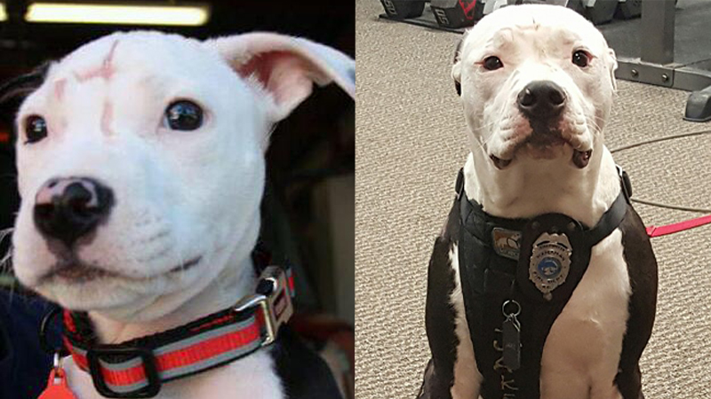 Ten pies walczył o życie, gdy był szczeniakiem. Teraz ratuje życie innych!