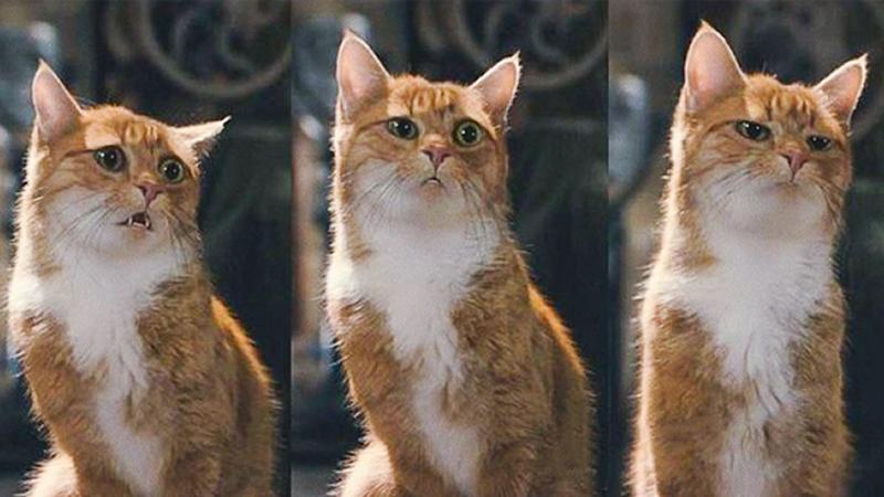 14 kotów z ludzkimi kłopotami i mimiką :)
