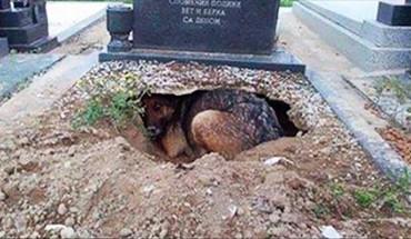 Ludzie myśleli, że ten psiak tęskni za zmarłym panem. Prawda okazała się całkiem inna!