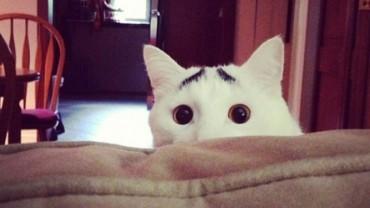 Uważasz, że wszystkie koty są podobne? Zobacz zwierzaki, które z pewnością nie mają swoich sobowtórów