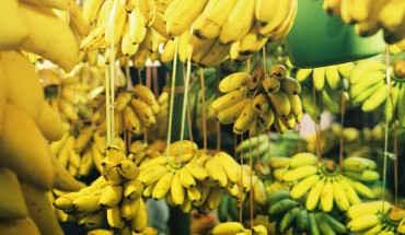 Uwielbiasz banany? Zobacz, na co zwrócić uwagę, zanim kupisz je w sklepie!