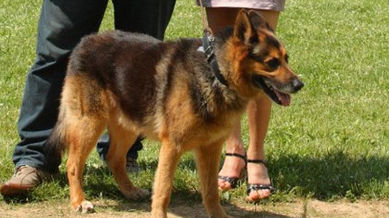 Poznajcie historię Rocky'ego, wyjątkowego psa, który przebył tysiące kilometrów, by odnaleźć swojego pana