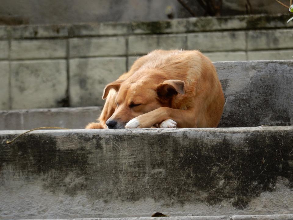 dog-1176132_960_720