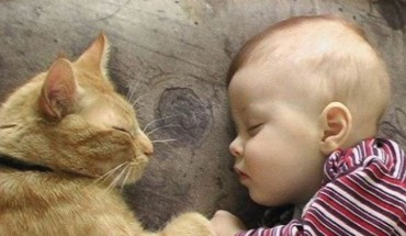 Uważasz, że koty są typowymi egoistami i samotnikami? Oto kilkanaście zdjęć, które dowodzą, że jest inaczej