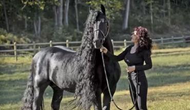 Poznajcie Fryderyka Wielkiego, konia fryzyjskiego, który swą urodą i gracją zachwycił cały świat