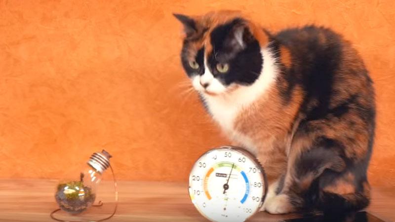 Męczy Was życie z kotem pod jednym dachem? Oto kilka sposobów, które ułatwią wspólną egzystencję