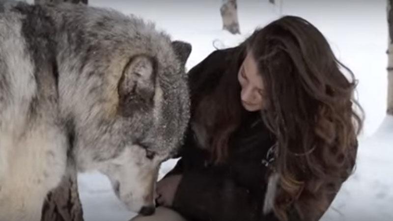 Prawdziwa przyjaźń nie zwraca uwagi na gatunek, czego dowodem jest niezwykła relacja młodej dziewczyny i potężnego wilka!