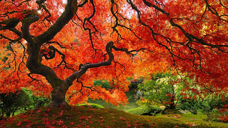 Oto 16 najpiękniejszych drzew na świecie. W cieniu którego z nich chcielibyście usiąść i odpocząć?