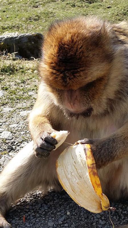 monkey-705920_960_720