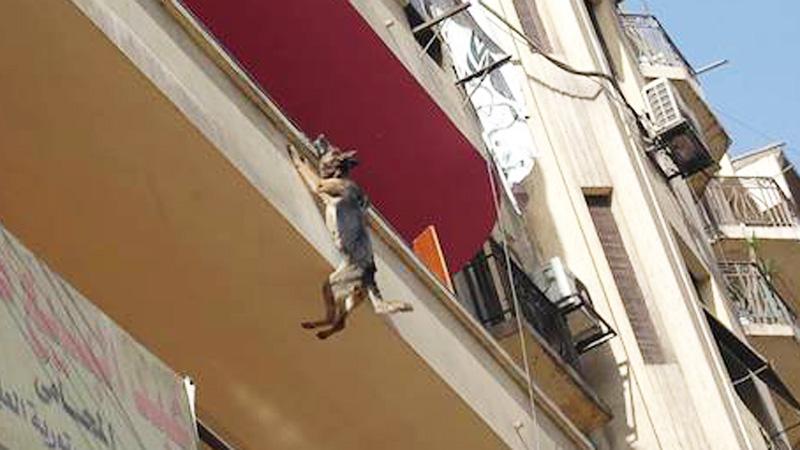 Pies zwisał z balkonu na łańcuchu owiniętym wokół szyi. W desperaci zębami złapał się parapetu...