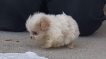Uratowany szczeniak znalazł w schronisku przyjaciela. Kogo? Przekonajcie się sami i poznajcie najsłodszą parę kumpli na świecie!