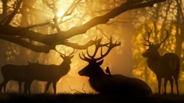 Te zdjęcia są prawdziwym powodem do dumy dla ich autorów. Oto kilkanaście niezwykłych fotografii zwierząt, które zachwycą każdego