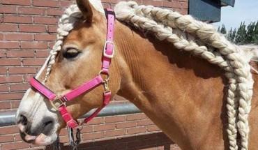 Nie tylko kobiety lubią chodzić do fryzjera. Konie również uwielbiają być czesane, co daje piękne efekty