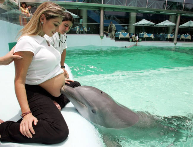 34905-650-1453126293-dolphin