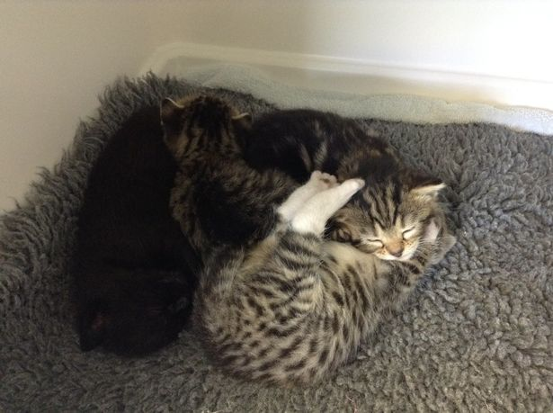 Mother-cat-sneaks-into-a-vet-clinic-to-be-with-her-abandoned-kittens (1)