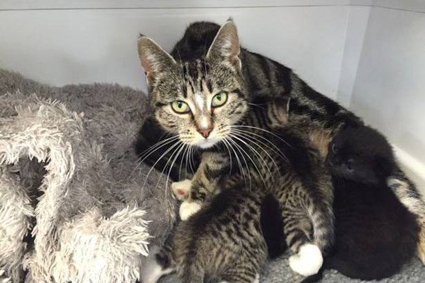 Mother-cat-sneaks-into-a-vet-clinic-to-be-with-her-abandoned-kittens