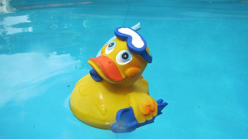 Żółta gumowa kaczuszka to symbol dziecięcych kąpieli. A gdyby tak popluskać się z prawdziwymi kaczkami?