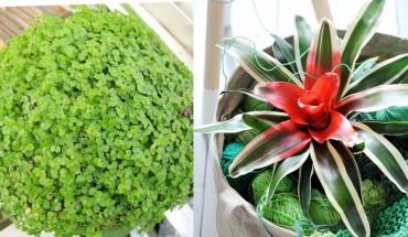 Lubisz rośliny, ale nie masz czasu ich pielęgnować? Oto kwiaty, które będą rosły nawet w ciemnym kącie