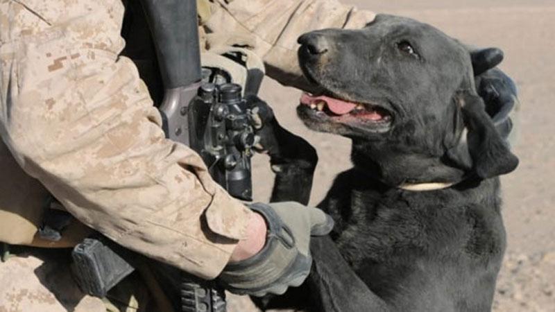 Dzięki tym psom świat może spać spokojnie. Poznajcie bohaterskie czworonogi, które pełnią służbę w wojsku