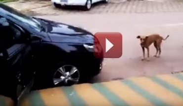 Pies zatrzymał się obok samochodu, z którego dochodziła głośna muzyka. Chwilę później zrobił coś, co rozśmieszy cię do łez