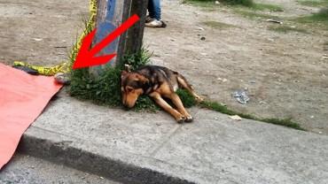Smutny pies leży na chodniku. Gdy zobaczysz, co znajduje się obok, nie będziesz w stanie powstrzymać łez