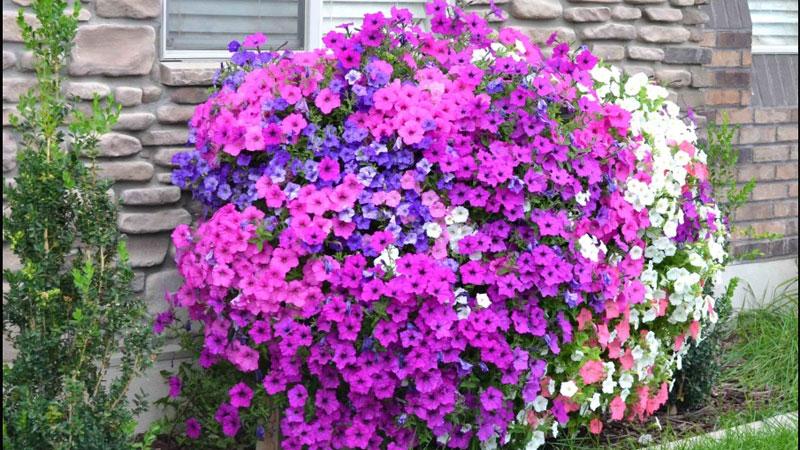 Jeśli chcesz, by wszyscy zazdrościli Ci pięknego ogrodu, musisz wypróbować ten pomysł na imponujący kwietnik