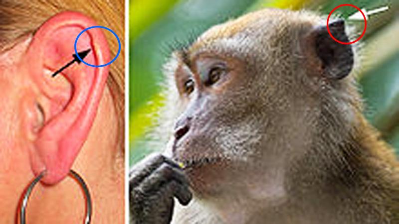 Masz taki guzek na uchu? Nie uwierzysz, o czym do świadczy!