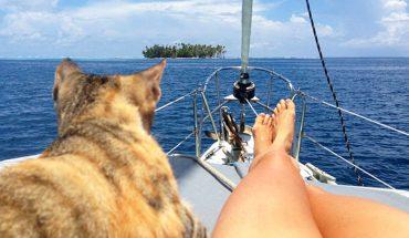 Kobieta rzuciła pracę i pożeglowała przez świat ze swoim kotem! Tylko pozazdrościć odwagi!