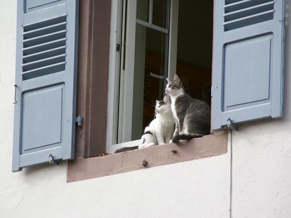 Ctass at a window in Place de l'Étolie - Obernai, Alsace, France, 17.9.2011
