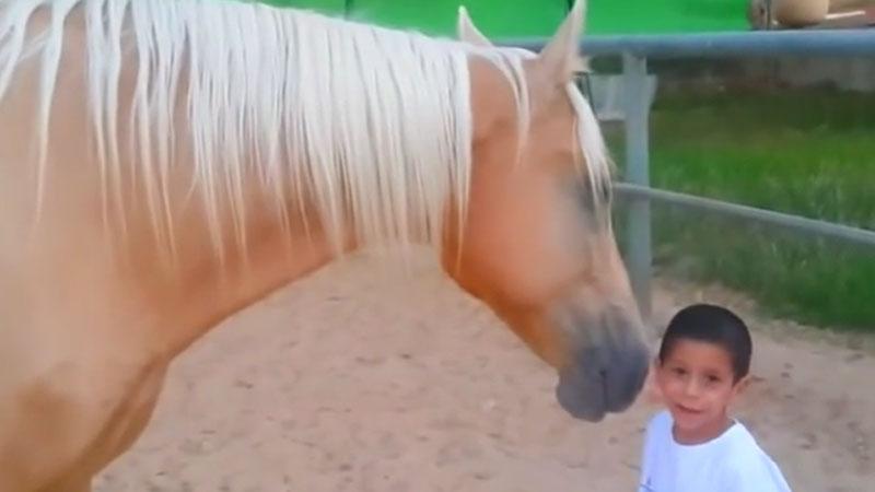 Niesamowite spotkanie chorego chłopca i konia. Zobaczcie, jak zaskakująco na siebie reagują