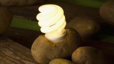 Czy zwykłe ziemniaki zrewolucjonizują rynek energii elektrycznej? Najnowsze odkrycie naukowców dowodzi, że tak!