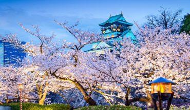 Widok kwitnących drzew wiśni potrafi zapierać dech w piersiach. O pięknie tych roślin przekonują te zdjęcia