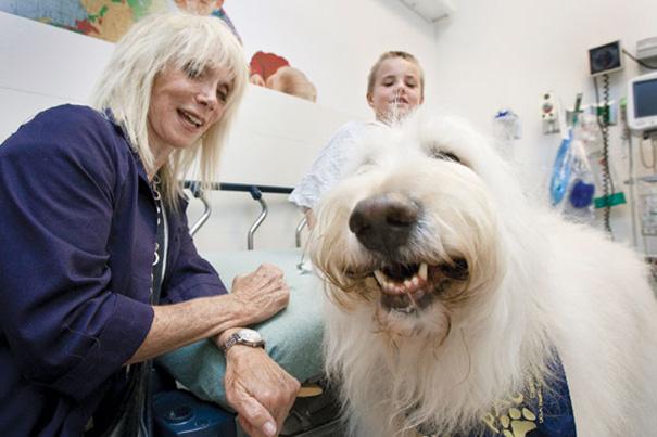 hospital-pets-allowed-animal-therapy-zacharys-paws-for-healing-juravinski-18