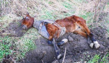Znaleźli ją na poboczu jezdni w opłakanym stanie. Metamorfoza tego konia udowadnia, że nie warto się poddawać!