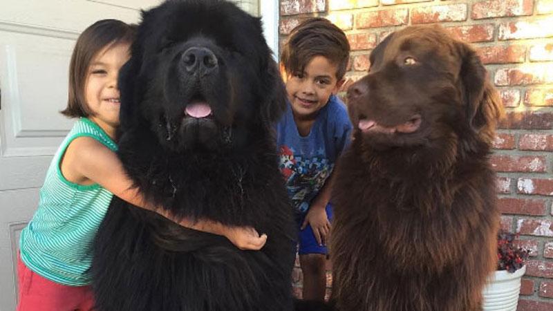 Trzej bracia mają niezwykłe szczęście, ponieważ opiekują się nimi psy, które są jak z bajki o Piotrusiu Panie