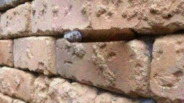 Co jeszcze widzisz na tym zdjęciu oprócz muru? Nic? Przyjrzyj się dokładnie!