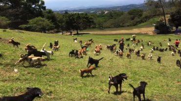 Czy pobyt w schronisku dla psów może być przyjemny dla czworonoga? Tak, jeśli trafi do psiego raju na Kostaryce!