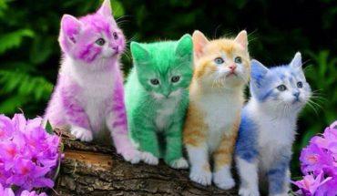 Nareszcie! Udowodniono, że oglądanie filmików z kotami zwiększa twoją wydajność!