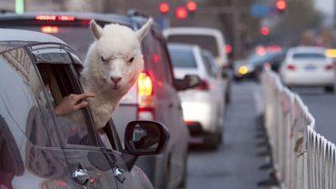 15 zabawnych zwierząt, które wiedzą jak ustawić się w życiu :D