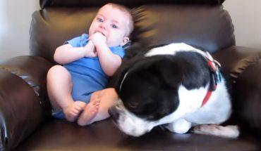 Z tego psa nie będzie dobrej niańki. Zobaczcie, co zrobił, gdy dziecko niespodziewanie napełniło pieluszkę