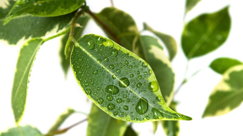 Rośliny doniczkowe, które oczyszczają powietrze z niebezpiecznych związków. Naprawdę warto je posadzić!