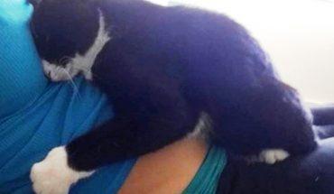 Ten kot uwielbiał spać na brzuchu ciężarnej właścicielki. To, co zrobił, gdy dziecko przyszło na świat, jest jeszcze bardziej urocze