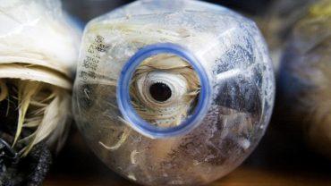 Przeszły mnie dreszcze, gdy zobaczyłam, co znajduje się w tych butelkach… Jak tak można?