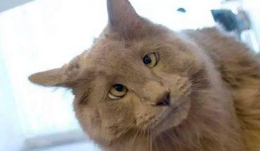 Myślicie, że zdjęcia kotów już niczym was nie zaskoczą? Zmienicie zdanie, gdy zobaczycie fotki kociaków, które mają zeza